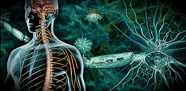 клетки и аутоимунные заболевания