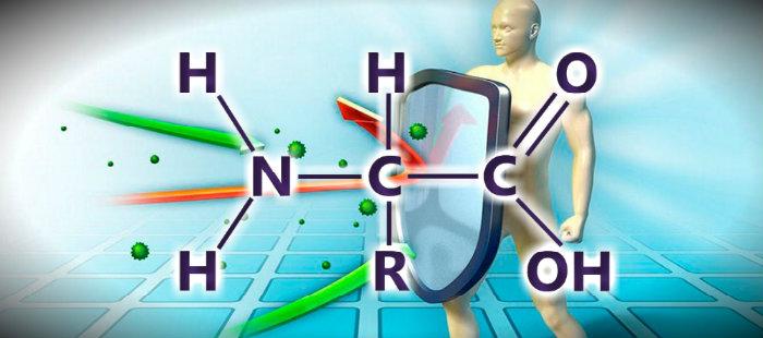 Аминокислоты для повышения иммунитета у спортсменов