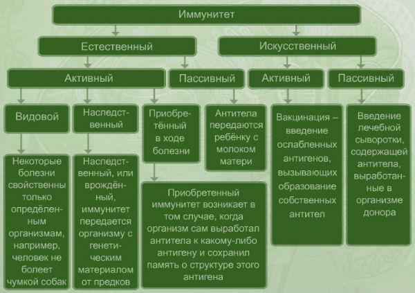 классификация иммунитетов схема