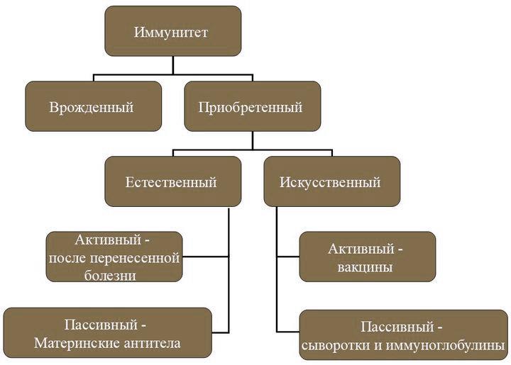 иммунная система виды иммунитета