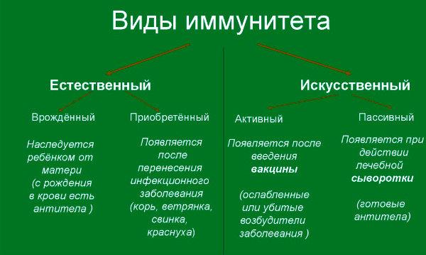 виды иммунитета зеленая таблица