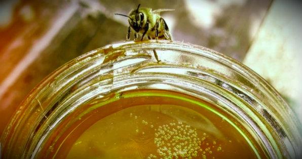 пчела и мед