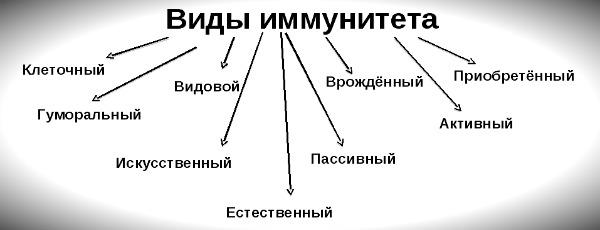 схема с видами иммунитета человека