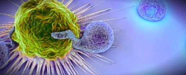 иммунная клетка атакует патоген