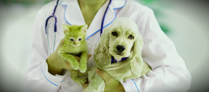 Какие болезни передаются человеку от домашних животных?