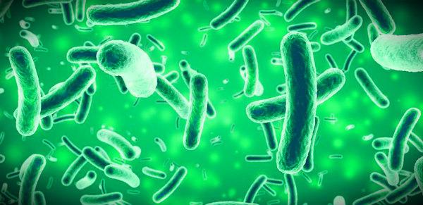 защита организма человека от микробов