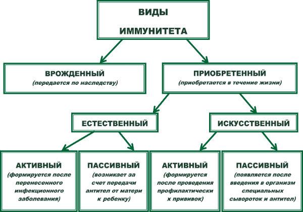 виды иммунитета которые есть у человека