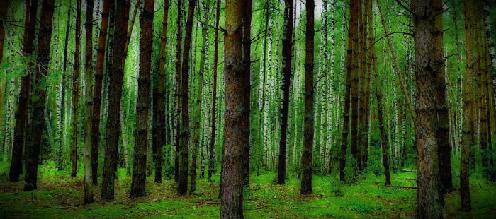 инфекции в лесу