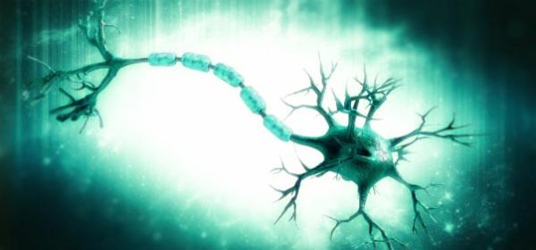 нервы нервная клетка