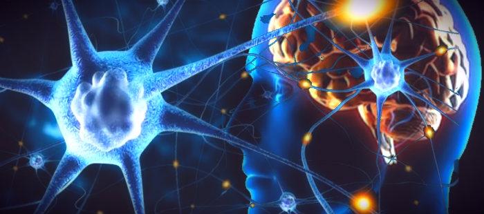 Взаимосвязь нервной и иммунной системы
