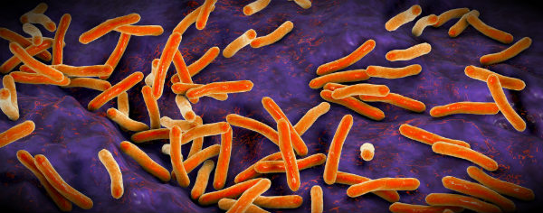 бактерии стафилококки