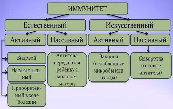 схема с видами иммунитета