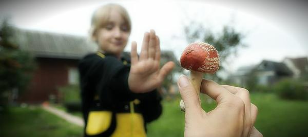 ребенок и ядовитый гриб
