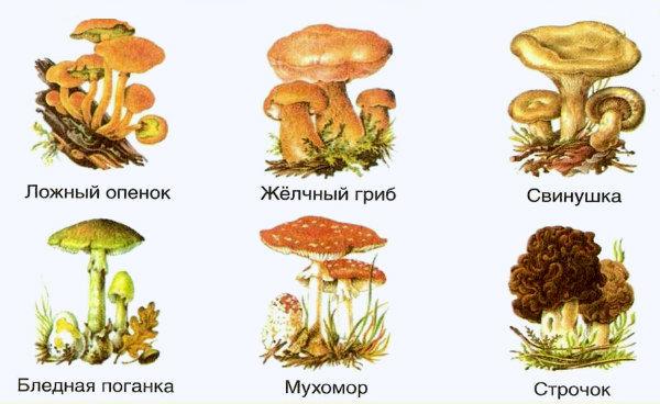 ядовитые грибы шесть видов
