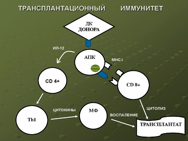 механизм развития реакции