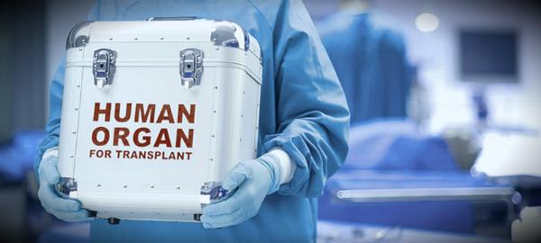 органы для трансплантации
