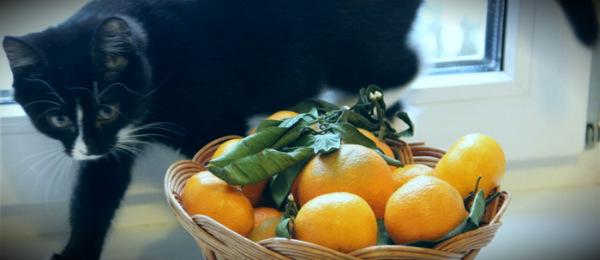 аллергия кошка апельсины